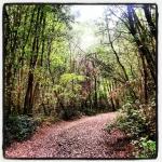 Un sentiero del Parco del Conero